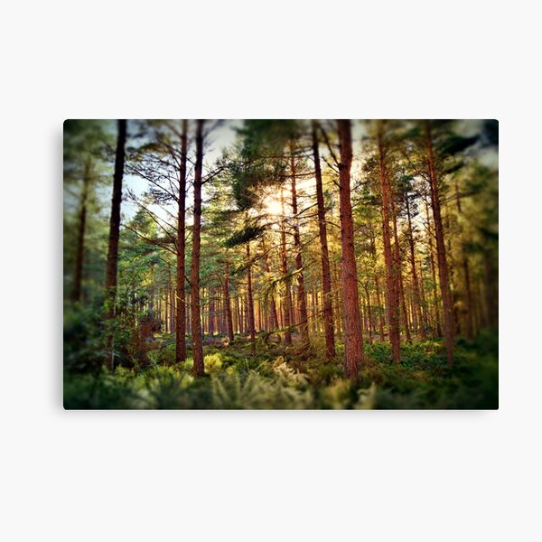 Forest Floor-Through the Pines (20) Canvas Print