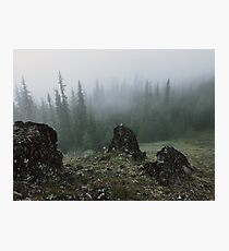 Olympic Peninsula Fog Photographic Print