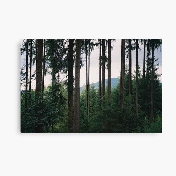 Forest photography Canvas Print