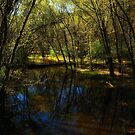Autumn at Afton State Park by Jimmy Ostgard
