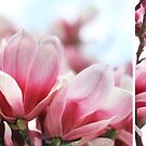 My Magnolia - diptych by Jo Williams