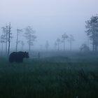 The bear in the mist by Matti Eskelinen