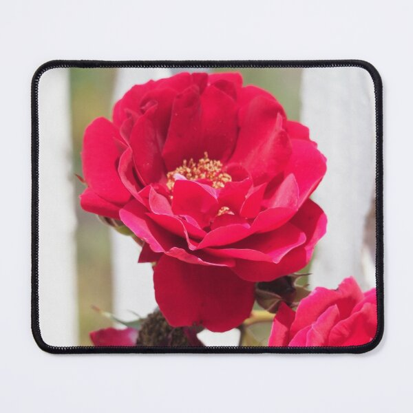 Red Rose and White Fence Mouse Pad