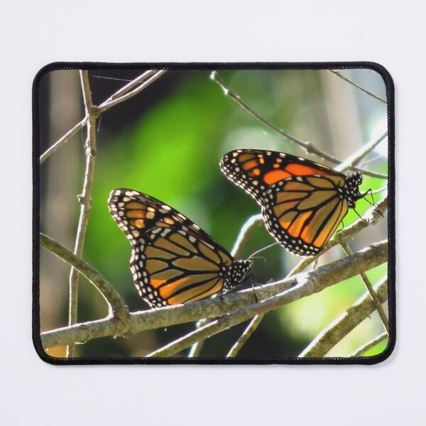 Monarch Butterflies Close Up, Santa Cruz, CA Mouse Pad