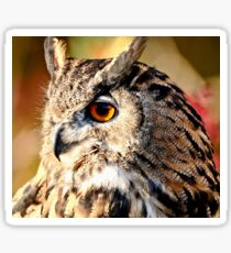 Eurasian Eagle Owl Sticker