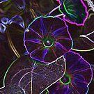 Neon Glory by Gail Jones