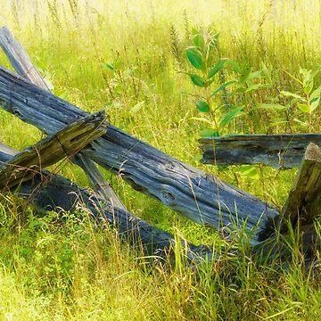 Fenceline by Jessticulate