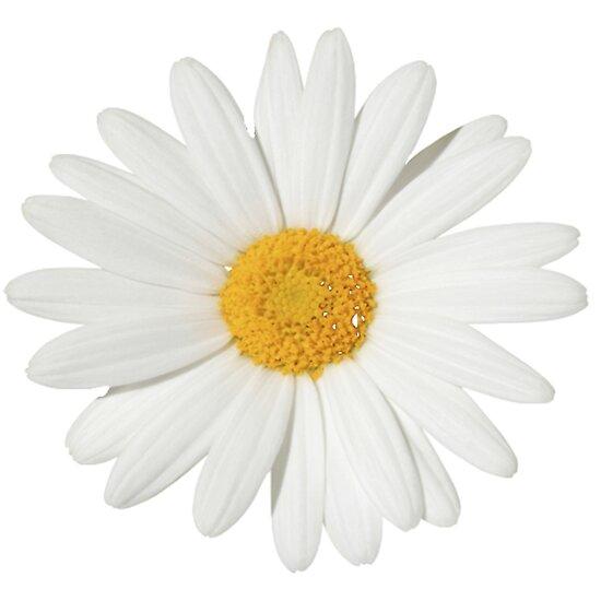 Daisy by jessguida