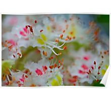 Poetry of the spring. by Brown Sugar. Boulevard View of Broken Dreams . Yeah!!! 1992 views. Favs (5). Poster