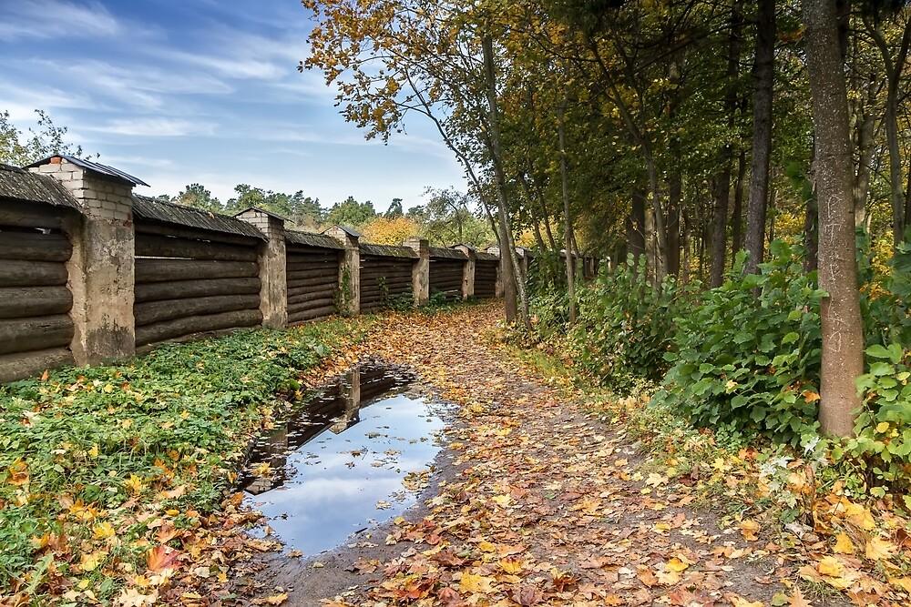 Old wooden fence by Geraldas Galinauskas