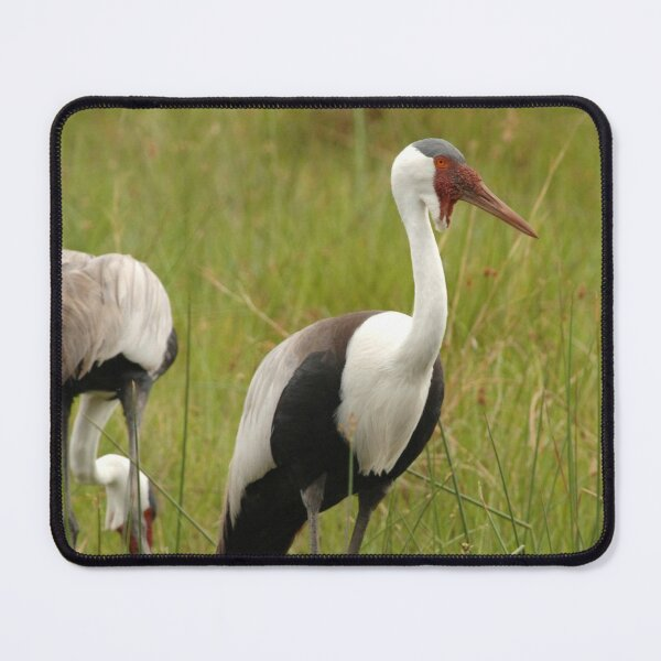Wattled Crane pair Mouse Pad