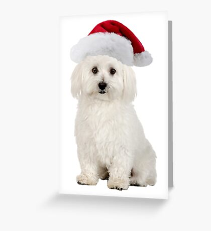 Bichon Frise Santa Claus Merry Christmas Greeting Card