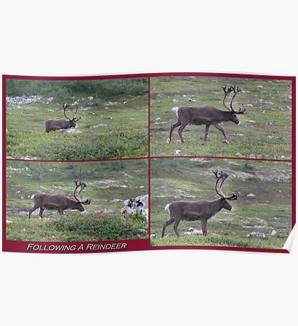 Following A Reindeer Poster