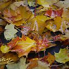 October greetings from Galicia . Dr.Andrzej Goszcz. by © Andrzej Goszcz,M.D. Ph.D