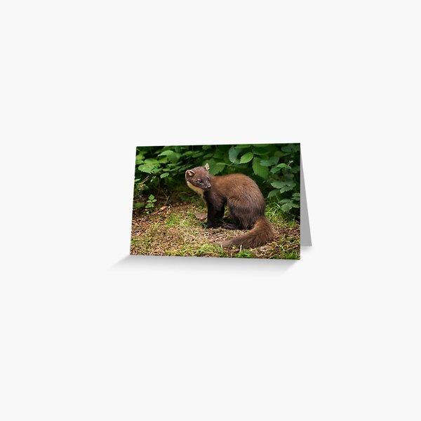 Pine Marten Greeting Card