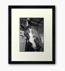 Many Sides of the Equine Framed Print