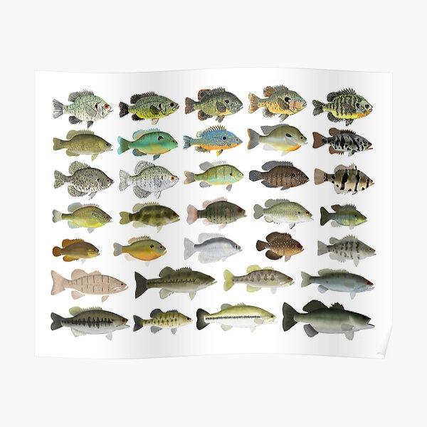 Sunfish Family Poster