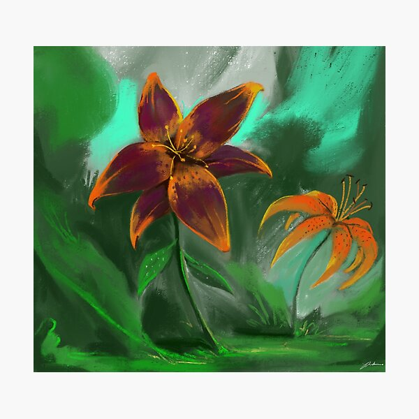 Love for Lilies  Photographic Print