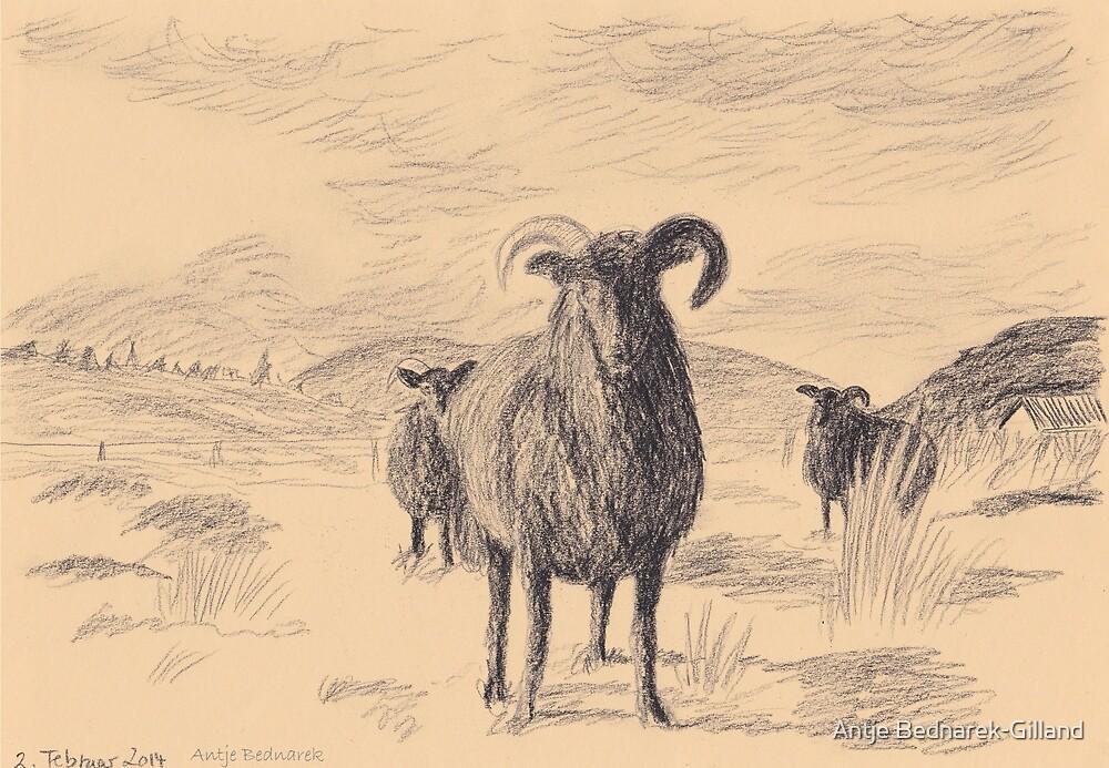 Black sheep by Antje Bednarek-Gilland