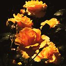 The Blooms of Spring - Honey Roses by Rasendyll