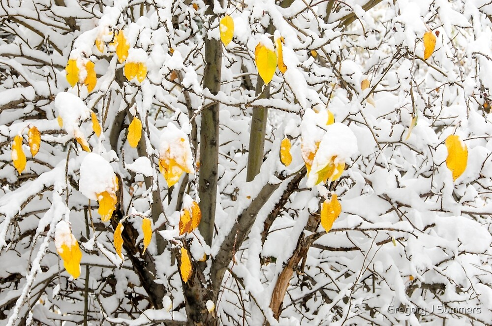Winter Ornaments by Gregory J Summers