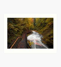 Glenariff Forest Park / County Antrim / Northern Ireland Art Print