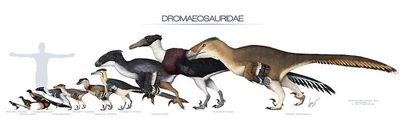 Quot Dromaeosaurid Dinosaurs Size Quot By Serpenillus Redbubble