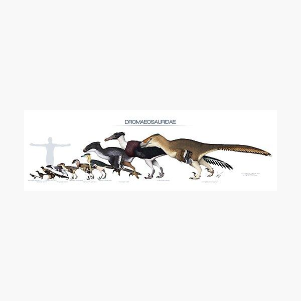 Dromaeosaurid Dinosaurs Size Photographic Print