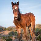 4-Last wild horses in Nevada by photo702
