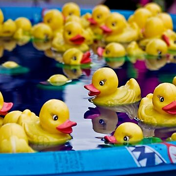 Duck, Duck, Duck,.... Pool? by sgrace