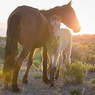 9 - Last Wild Horses in Nevada by photo702