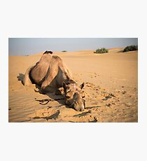 Poor Tired Camel Photographic Print