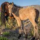 13 - Last Wild Horses in Nevada by photo702