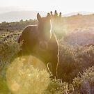 14 - Last Wild horses in Nevada. by photo702