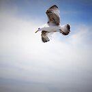 I soar , I swoop , I steal , I am the seagull by Profo Folia