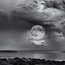 Moonlight  by Alessandra Antonini