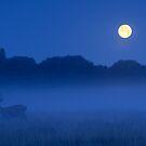 Full Moon by Kasia Nowak
