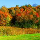 Vivid Autumn by shutterbug2010