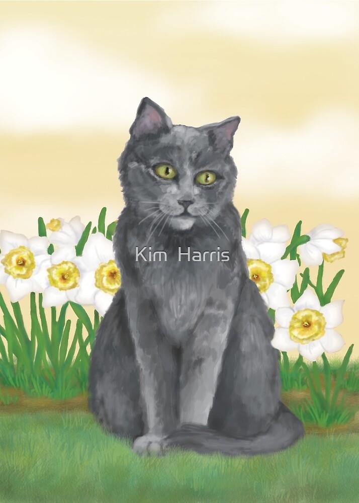 Django Amongst the Narcissus  by Kim  Harris