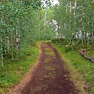 Granby Trail by Robert Meyers-Lussier