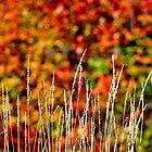 The Colours of Autumn by Kathleen Daley