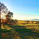 Sunrise at Rawnsley Station, Flinders Ranges by George Petrovsky