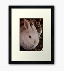 Bunnies Framed Print