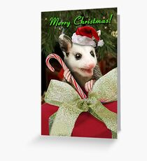 Christmas Opossum  Greeting Card