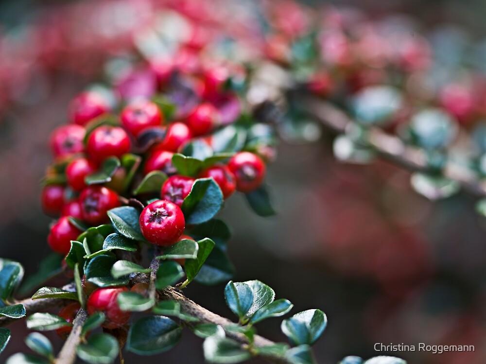 Red Berries by Christina Roggemann
