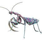 mantis colorful von Florian  Gelbmann