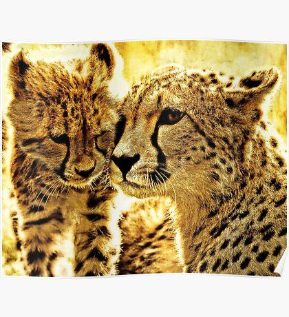 Cheetah affection Poster