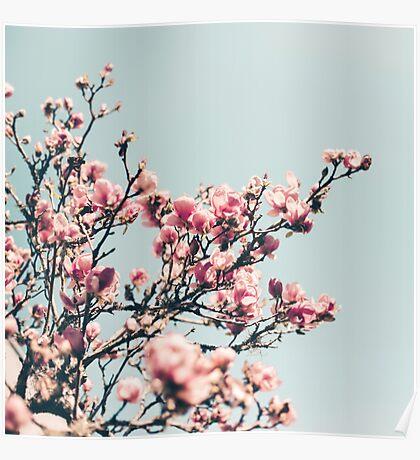japanese magnolias Poster