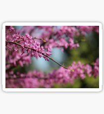 Redbud Blossoms Sticker