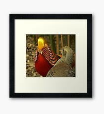 Golden Pheasants Framed Print